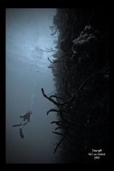Great Wall West -  Bloody Bay - Little Cayman by Neil Van Niekerk