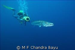Baraccuda - Liberty, Tulamben by M F Chandra Bayu