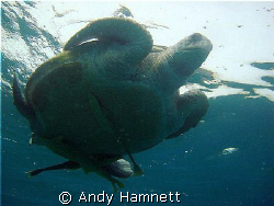 Turtle from the bottom by Andy Hamnett