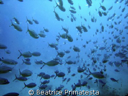 Fishes...! (Caesio sp) by Beatrice Primatesta