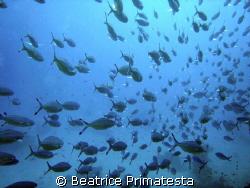 Fishes...! (Caesio sp) by Beatrice Primatesta
