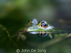 These picture of the frog I made in my own garden. It too... by John De Jong