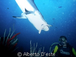 Skark eats front diver by Alberto D'este