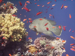 diving alond reef beach , i came across this fella , its ... by John Johnson