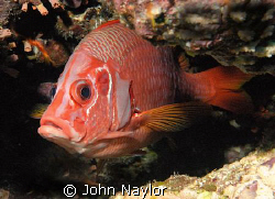 squirell fish.taken at elphinstone reef.grab shot as i dr... by John Naylor