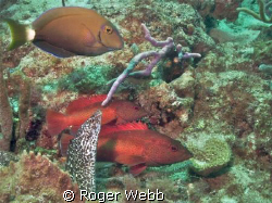 Moray and friends by Roger Webb