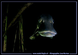 Face to face with this beautiful Pike Fish - during a nig... by Michel Lonfat