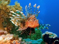 A Lion fish . Cannon G7 Nikon sb105  by Vidar Aas