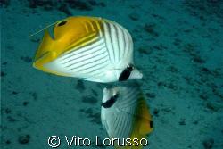 Fish by Vito Lorusso