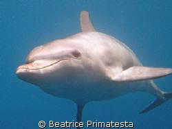 Dolphin by Beatrice Primatesta