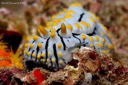 FULL FRAME Shot of a common Nudi here in the Andaman Sea.... by Patrick Neumann