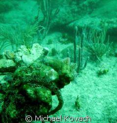 Christmas Tree worms on the coral on the inside reef at L... by Michael Kovach