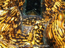 Highway to Heaven.. Giant Clam taken at Redang Island. Ol... by Adrian Schokman