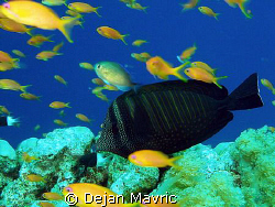 Early morning dive at Small Gotaa of St.John. Olympus SP-... by Dejan Mavric