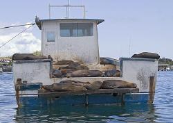 Sealion liveabord. San Cristobal, Galapagos. 18-200mm. by Mark Thomas