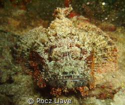 startled stone fish @ Divers Sanc, Phils. by Rocz Llave