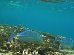 Big Island, Hawaii Olympus SP350 by Bill Arle