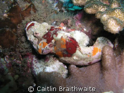 scorpion fish, taken at Julian Rocks, Byron Bay Australia. by Caitlin Braithwaite
