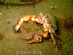 Again taken at Minard Loch Fyne ,couple of hermit crabs.