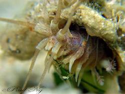 "Unknown. Underwater ""Alien"" by Paul Ng"