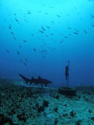 Shark, Magic Point by Doug Anderson