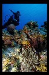 Hannah -  Randy's Gazebo - Little Cayman -  D100 10-20mm  by Neil Van Niekerk