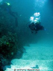 Divers on Scotsman Reef in Port Elizabeth, taken with a C... by Anthony Wooldridge