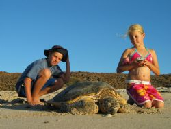 Kids watching hawksbill return to water after egg laying.... by Warren Richards