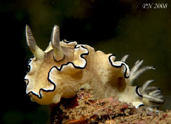 NUDI POSING - for my Canon 400D+100mm macro lens at Koh D... by Patrick Neumann