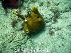 Alien looking tube sponge on the inside reef at Lauderdal... by Michael Kovach