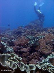 The Reef of Layang Layang Atoll Malesia. by Kirsi Lehtinen