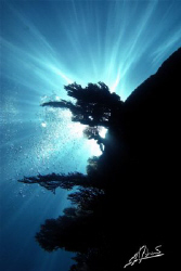 sunburst over coral in Richelieu Rock (Surin Islands) , T... by Adriano Trapani