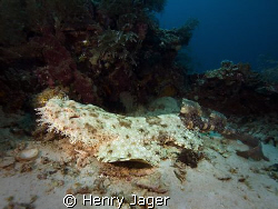 """Wobbegong""  Raja Ampat, West Papua. It's a rare to see t... by Henry Jager"