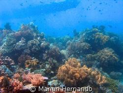 Bunaken, Marine National Park, Manado,North Sulawesi Indo... by Marian Hernando