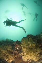 Divers! Gordons rock. Galapagos. D200, 10.5mm. by Derek Haslam