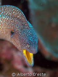 Muraena mouth yellow by Alberto D'este