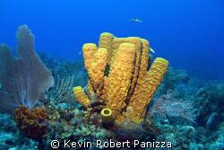 Yellow Tube Sponge in Cayman Brac. Canon G-9 w/ Ikelite ... by Kevin Robert Panizza