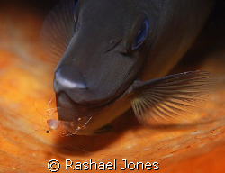 Now where did that shrimp go? by Rashael Jones