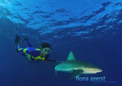 Galapagos sharks abound at the atoll  - Bassas da India -... by Fiona Ayerst