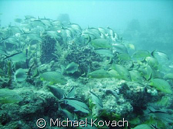Fish on the third reef line off of Fort Lauderdale by Michael Kovach