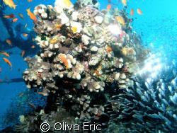 Light fishs by Oliva Eric