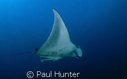 Manta Ray taken at Sodwana Bay, South Africa on Bikini reef. by Paul Hunter