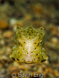 Want A Kiss? Taken in Anilao with Canon G9, Inon Z240 & l... by Edvin Eng