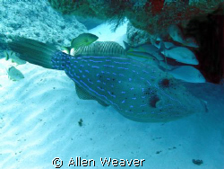 FILEFISH by Allen Weaver