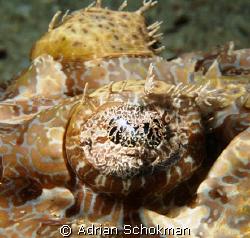 Up Close & Personal.. Sipadan Island Taken with Olympus E... by Adrian Schokman