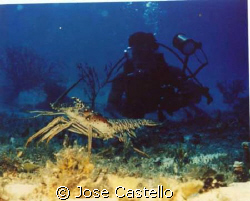 swimming along the bottom trying to get this big male lob... by Jose Castello