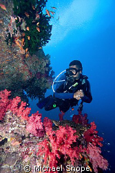 I was very lucky to be the only diver on the boat most da... by Michael Shope