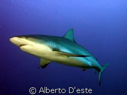 Green shark in Jardines de la Rejna - Cuba by Alberto D'este