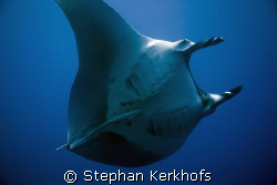 manta (manta birostris) taken at ras umm sid.