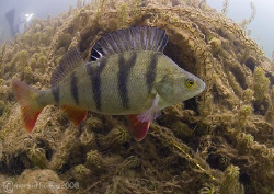 Perch.